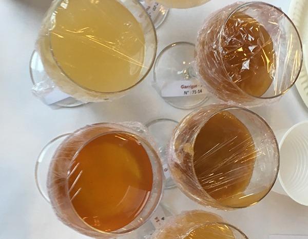 MAINE AGROTEC fait partie du jury qui décerna au Palais d'Iéna les médailles d'or aux meilleurs miels de France.